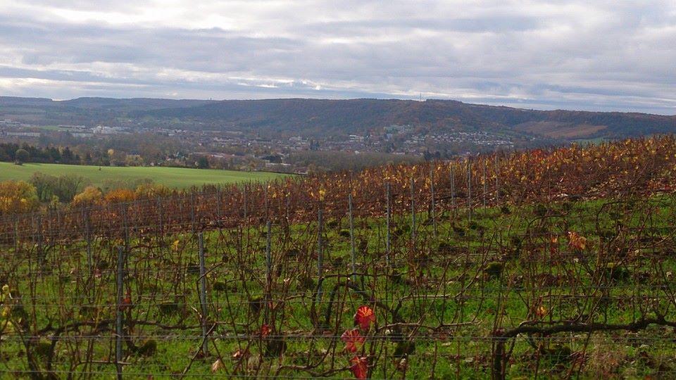 Vue sur le vignoble à l'automne